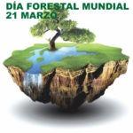 Juegos para el Día Forestal Mundial