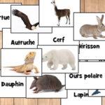 Nombres de Animales en Francés