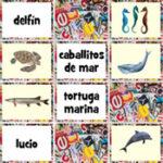 Animales Marinos en Español