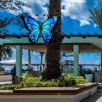 Cazar mariposas