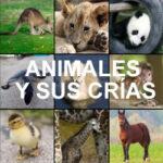 Correspondencia de Animales y sus Crías