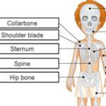 Huesos del Cuerpo en Inglés