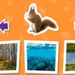 Hábitat: ¿dónde viven los animales?