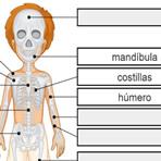 Nombrar los Huesos del Cuerpo