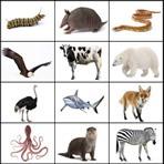 Listening de Animales en Inglés