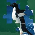 Puzzles de Pingüinos