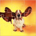 Puzzles Divertidos de Perros