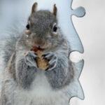 Puzzles de Invierno