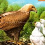 Rompecabezas de Pájaros Online