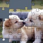 Puzzles de Perros Online