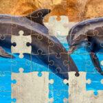 Rompecabezas de Delfines 64 Piezas